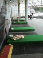 IKEA'dan Köpeklere Özel Bekleme Yeri