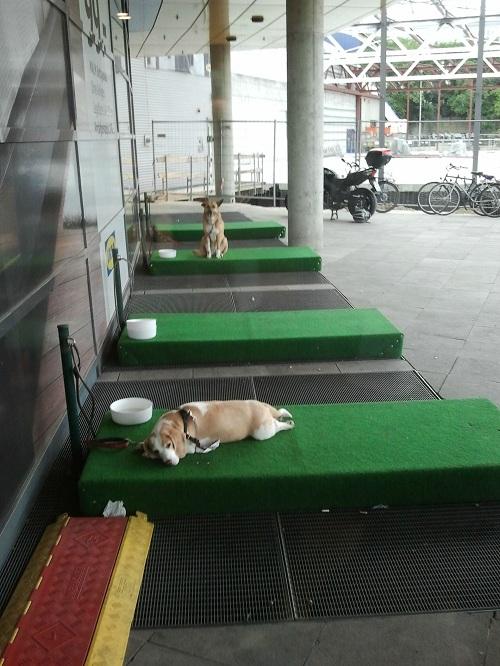 IKEA'dan Köpeklere Özel Bekleme Yeri muraterdor.com